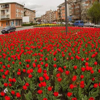 Primaria Municipiul Turda